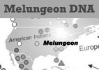 Melungeon DNA Update