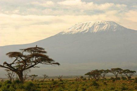 Birds Eye View of Kilimanjaro