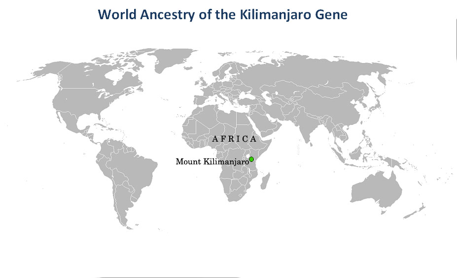 The Kilimajaro Gene