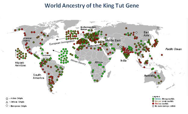 The King Tut Gene