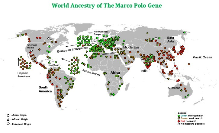 The Marco Polo Gene map