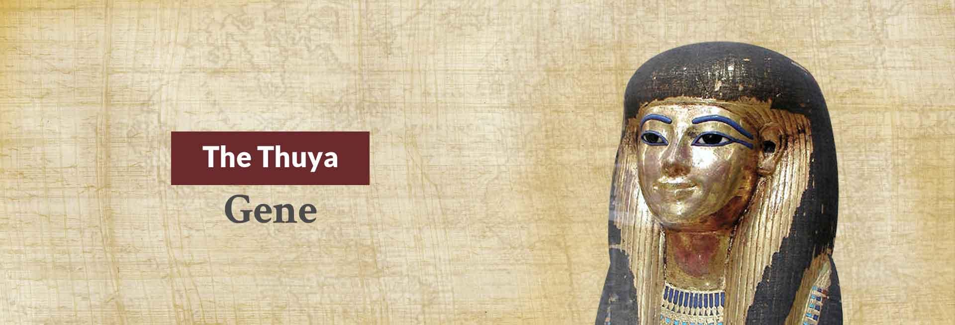 The Thuya Gene